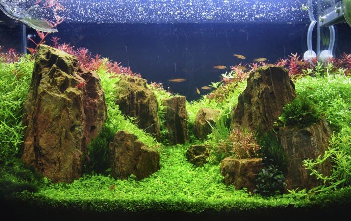 Ako si správne vybrať akvárium