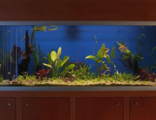 Renovácia 700l spoločenského akvária