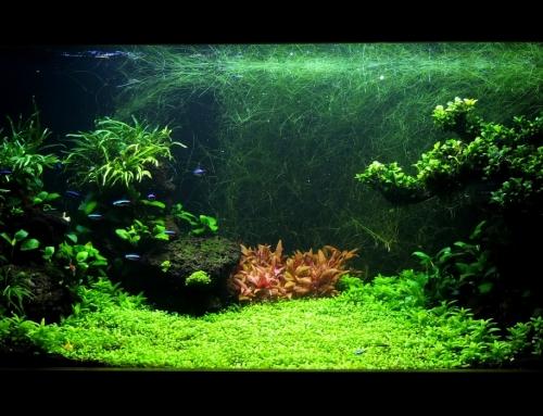 Landscape akvárium